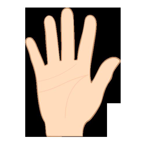 background palm